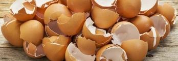 إذا كنت من محبي تناول البيض.. فإليك هذا الخبر!