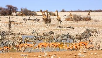 في هذه الدولة.. 1000 حيوان بري للبيع بسبب الجفاف