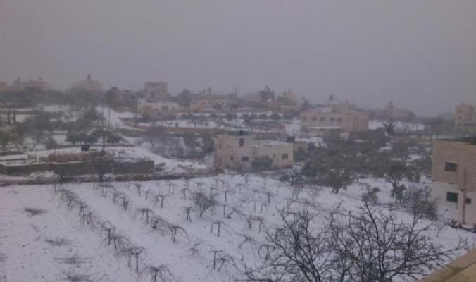مع منخفض ديشوم الثلجي... دببه وبطارق قطبية تجتاح فلسطين من صفد وحتى الخليل