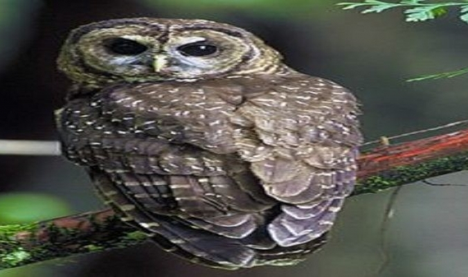 """7 حقائق عن """" البوم """" الطائر الثرثار تعرف عليها"""
