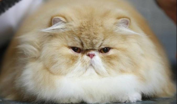 لماذا يكره الفاتيكان القطط كثيراً؟