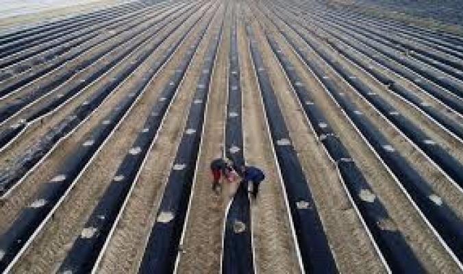 كورونا يحرم مزارع أوروبا من العمال الموسميين الأجانب