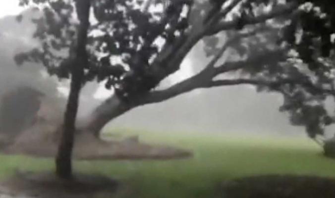 شاهد.. رياح عاتية تقتلع الأشجار من جذورها