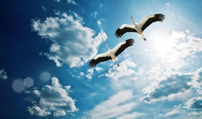 الطيور تغفو أثناء الطيران دون السقوط من السماء