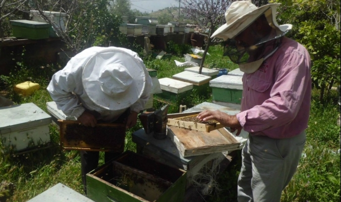 النحل في فلسطين يواجه أخطار المبيدات والتوسع العمراني...فهل تنجح حملات التوعية؟