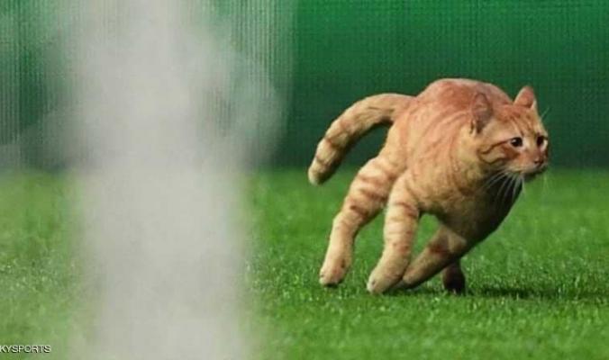 دوري أبطال أوروبا.. قطة تكلف فريقا 40 ألف دولار