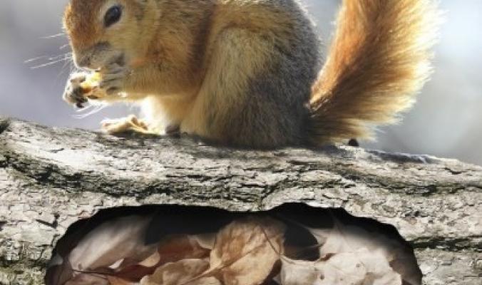 معلومات مذهلة.. هل تنام الحيوانات فعلاً في بياتها الشتوي؟