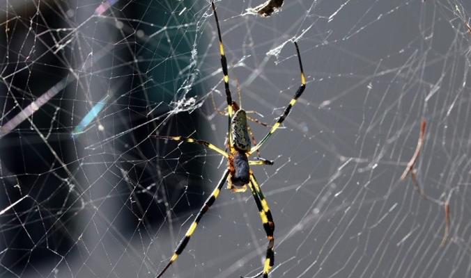 لهذه الأسباب لا تقتل العناكب في المنزل