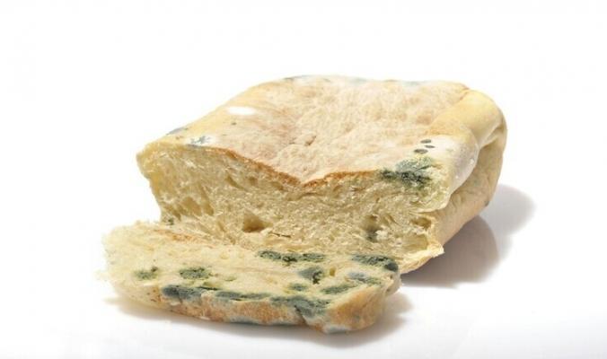 ماذا يحصل في الجسم عند تناول خبز متعفن؟