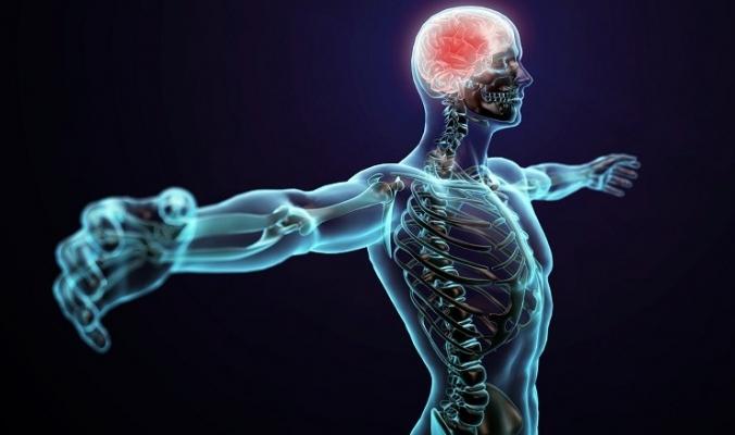10 أجزاء غريبة في الجسم لا تعرف أنك تملكها