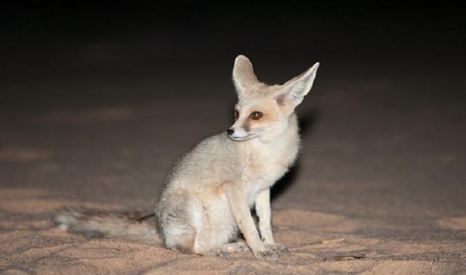 3 حيوانات برية يصعب العثور عليها خارج الخارطة العربية