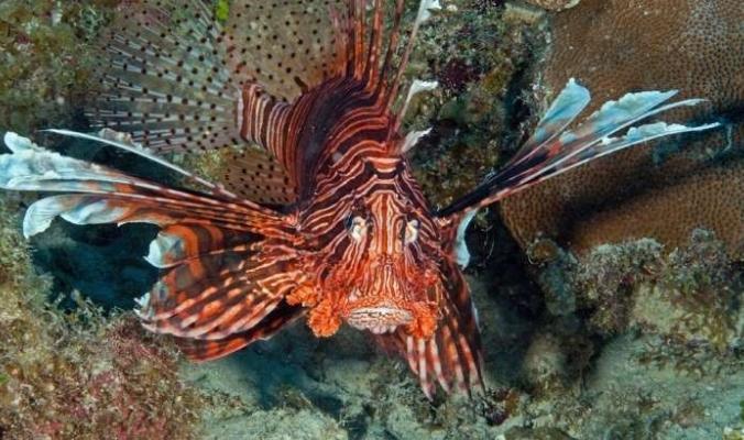 لا تغرنك الصور ...خمسة كائنات حية تهدد النظام البيئي في أوروبا