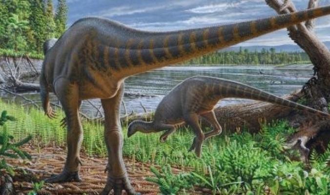 """الديناصورات ليست كلها عملاقة بعضها كان بحجم """"الديك الرومي""""! اكتشاف حفريات تؤكد أن الأرض كانت قارةً واحدةً وانقسمت"""