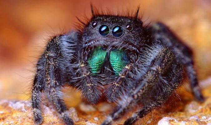 العناكب كما لم تشاهدونها من قبل: لأن عينين اثنتين لا تكفيان!