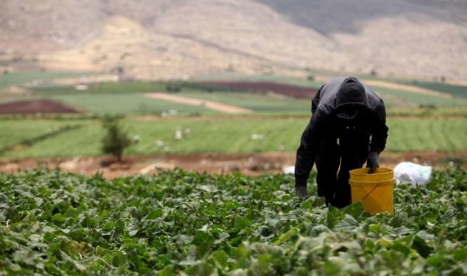 بتكلفة 230 مليون دولار..هل تنجح الخطة الوطنية للإنتاج والاستهلاك المستداميّن؟