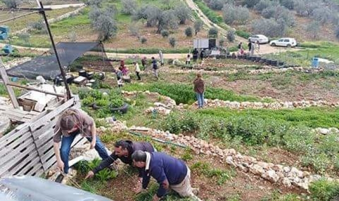 من قلب مزرعة عضوية في رام الله...نشطاء فلسطينيون يطلقون يوم الزراعة البيئية المدعومة شعبيا