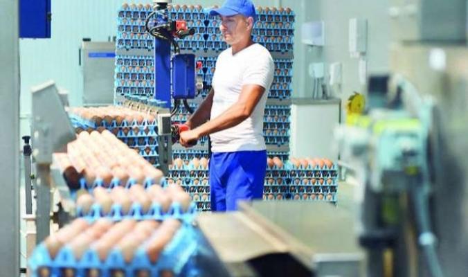 فضيحة البيض الفاسد تضرب صناعة الغذاء في أوروبا