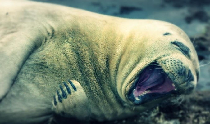 15 لحظة «ضحك ولعب وجد وحب» في عالم الحيوان: لقطات نادرة لم تشاهدها من قبل