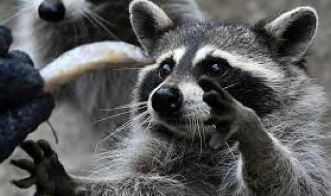 أقدم حديقة حيوان في العالم لم تسلم من ضربات كورونا