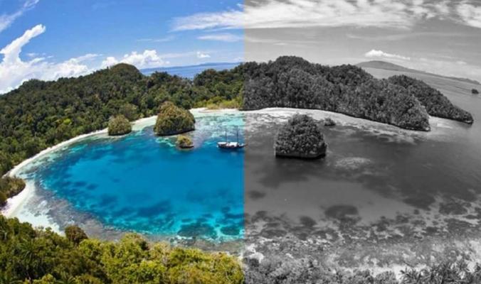 جزيرة غريبة لا يرى سكانها إلا باللون الأبيض والأسود