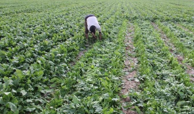 الضربات من جميع الاتجاهات على مزارعي غزة وآخرها رش إسرائيل لمبيدات كيميائية تقضي على محاصيلهم الحدودية