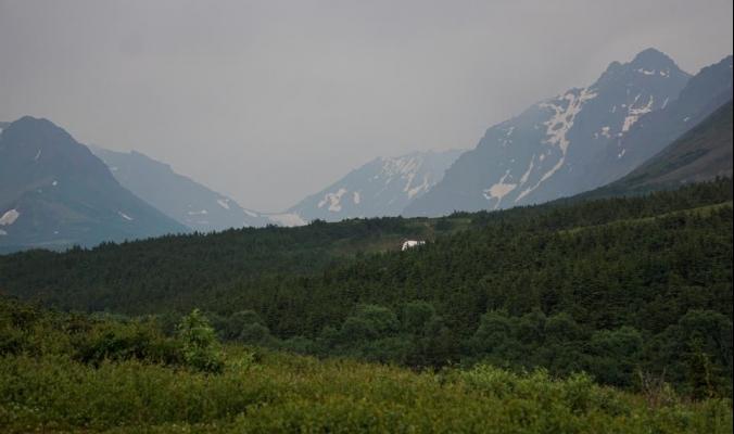ألاسكا الباردة تلتهب.. وخبير مناخ يحذر