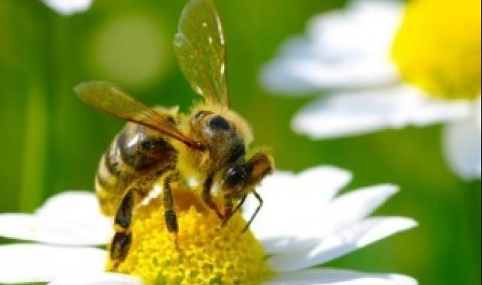 الحشرات توفر 1,4 مليار وظيفة حول العالم.. كيف؟