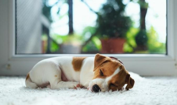 تحذير لمحبي الكلاب.. قد تصيبك ببكتيريا قاتلة