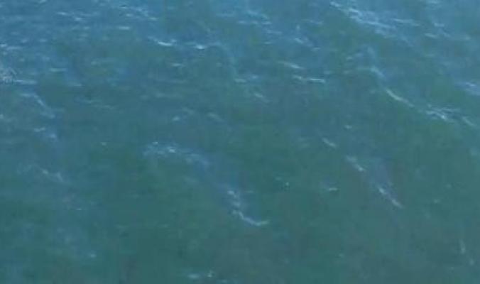 قفز في مياه البحر هرباً من الشرطة فوجد نفسه متبوعاً بسمكة قرش
