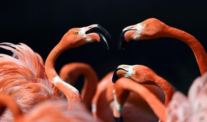 شرطة خاصة لحماية طائر الفلامنغو في البصرة