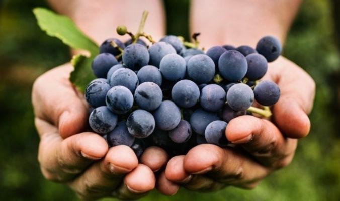 لهاذا السبب، تجنب وضع العنب في المايكروويف!