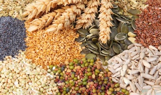 السيادة الوطنية على البذور... شرط استراتيجي لمواجهة التحديات الخارجية في القطاع الزراعي الفلسطيني