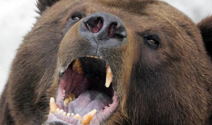 مات بطلاً: هاجم الدبّ أطفاله، فواجهه بصدرٍ عارٍ حتى يتمكن الصغار من الهرب!