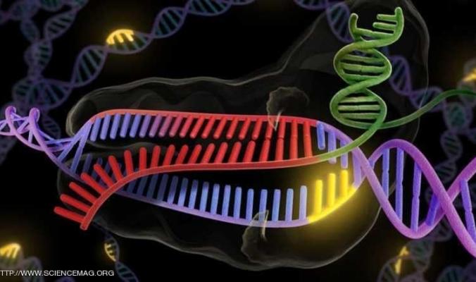 للمرة الأولى.. تعديل الجينات البشرية