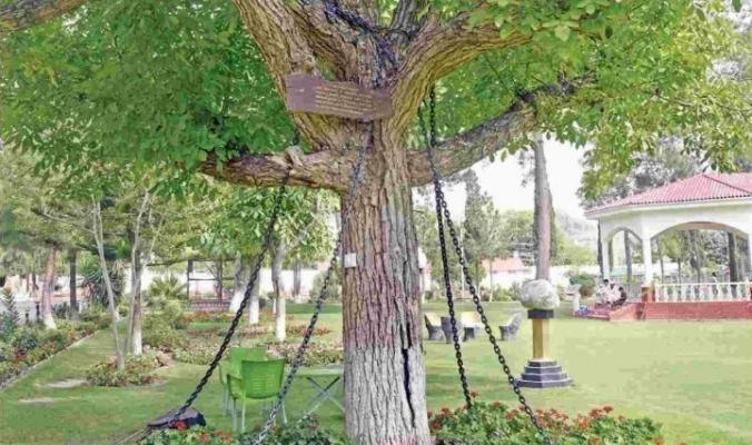 ما سر الشجرة التي تم اعتقالها في باكستان؟