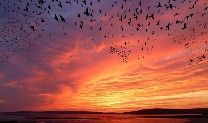 كيف تهاجر الطيور في الظلام؟