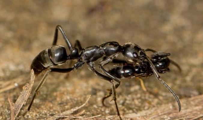 تجربة النمل في التكيّف مع فترات الجفاف تعود إلى 30 مليون سنة