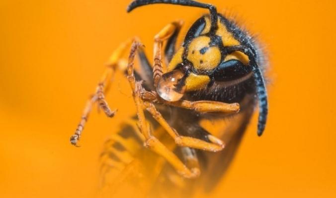 هل سبق لك أن تمنّيت الهلاك الكاسح للحشرات حولنا؟؟ إذا أنظر لما سيحدث إن اختفت من العالم؟