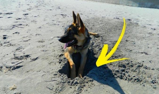 لماذا تعشق الكلاب الحفر؟