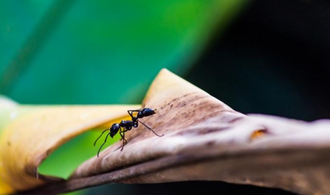 من بينهم «النملة الرصاصة» و«النحل الأفريقي».. بعض أخطر حشرات في العالم يجب تُميزها وتبتعد عنها فوراً