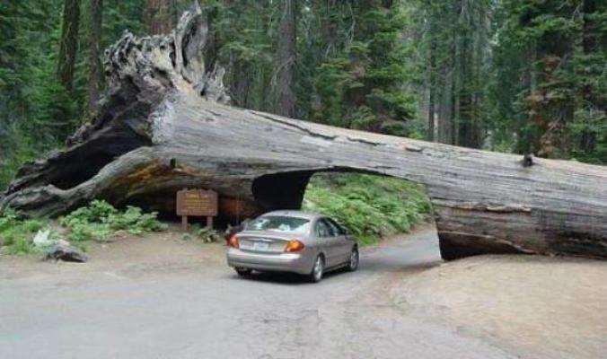 نفق الشجرة