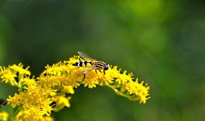 كيف تتحدث النباتات مع بعضها وتتبادل المعلومات؟