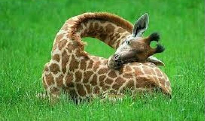كيف تنام الحيوانات؟