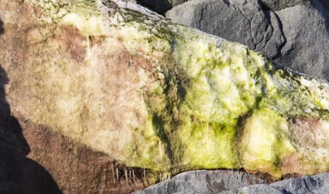 ما سر الثلج الأخضر في أنتاركتيكا؟