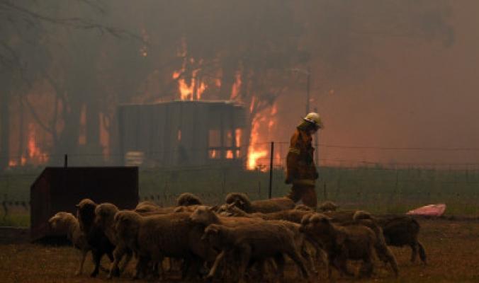حرائق أستراليا تغيّر لون سماء نيوزيلندا وتفزع السكان، الرياح حملت الدخان آلاف الكيلومترات