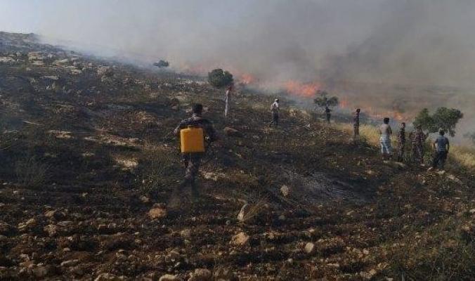 حريق كبير يلتهم أكثر من ألف شجرة زيتون شمال الضفة