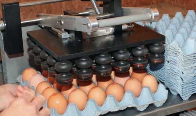 """البيضة اللقيطة ...متى سيتم تفعيل وسم البيض الفلسطيني """"ختم الصلاحية"""" حمايةً للمستهلك ؟"""