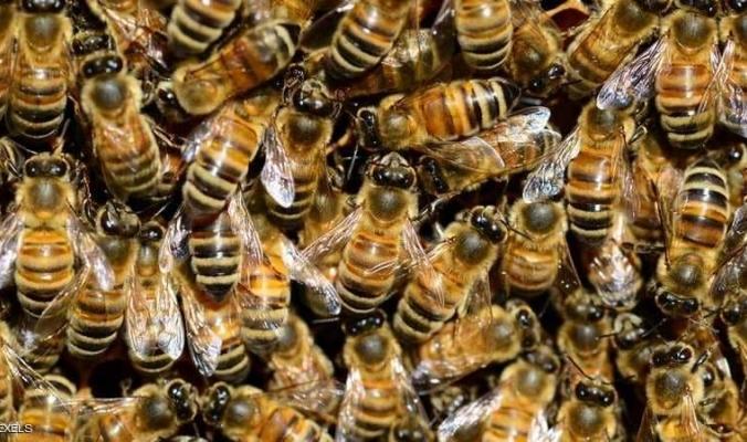 عالمنا ينتظر كارثة.. والحشرات السبب