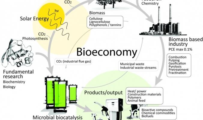 الاقتصاد القادم.. من الطحالب والبكتيريا حتى نشا البطاطا وأوراق الطماطم!
