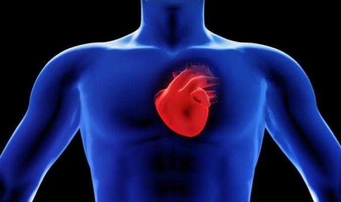 لماذا لا تتعب عضلة القلب مثل باقي عضلات الجسم؟